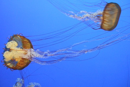 For example, the one with two jellyfish swimming in the pure blue water.